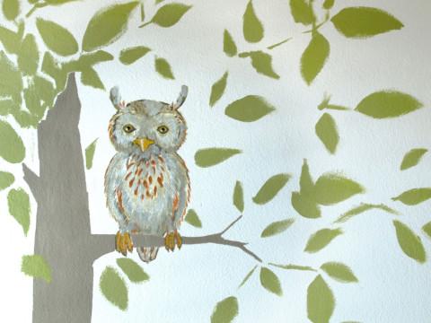 Waldkauz, Eule, Vogel an der Wand
